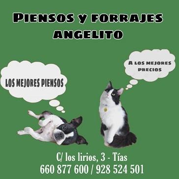 PIENSOS Y FORRAJES ANGELITO